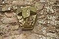 Raglan Castle (0322).jpg