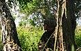 Rapid Trident 2013 130716-A-ZZ999-005.jpg