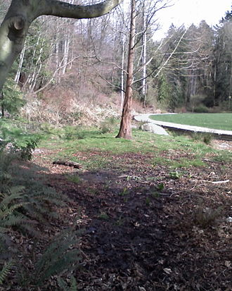 Ravenna Creek - Creek headwaters in Cowen Park, winter 2008