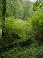 Ravenna Park 02 - colormapped.jpg