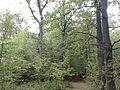 Rezerwat przyrody Dęby w Meszczach 12.11.jpg