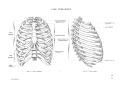 Richer - Anatomie artistique, 2 p. 16.png