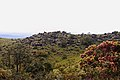 Rocks on a hill near view point hill, Ayatana, Coorg.jpg