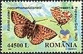Romania2002 Boloria pales carpathomeridionalis.jpg