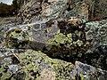 Ropotamo reserve stones - Камни заповедника Ропотамо (30670910510).jpg