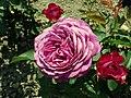 Rosa Heidi Klum Rose 2019-06-05 7601.jpg