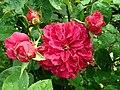 Rosa L.D. Braithwaite 2019-06-07 1409.jpg