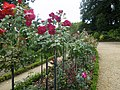 Roses au jardin du thabor a rennes - panoramio (4).jpg