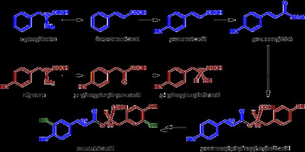 Rosmarinic acid biosynthesis