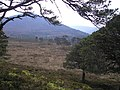 Rothiemurchus Forest looking towards Carn Eilrig - geograph.org.uk - 425752.jpg