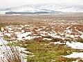 Rough grassland - geograph.org.uk - 86186.jpg