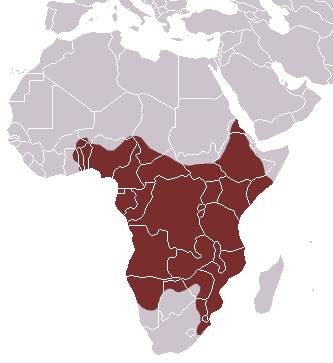 Rusty-spotted Genet area