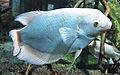 Särkänniemi - fish 2.jpg