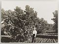 SLNSW 919946 Series 04 Fruit and vegetables ca 19211924.jpg