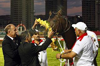 Sabirli (horse)