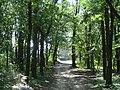Sachsenburg Weg zur Unterburg - panoramio.jpg