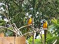Saint-Jacut-les-Pins - Tropical Parc (06).jpg