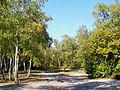 Saint-Prix (95), lieu-dit les Sapins Brûlés, forêt de Montmorency (2).jpg