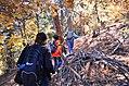 San Bernardino National Forest (31165700435).jpg