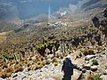 Scaling Mt. Kenya.jpg