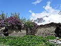 Scenery around Kazbegi - Greater Caucasus - Georgia - 09 (17953402533).jpg