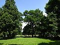 Schlösschen Borghees PM15 14.JPG
