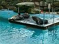 Sea lion enclosure, Chessington World of Adventures - geograph.org.uk - 254717.jpg