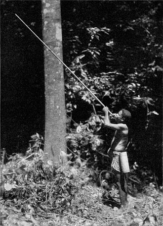 Semang - A Semang man shoots an arrow from his blowgun. The bamboo quiver at his side contains the strongly poisoned arrows. 1937.