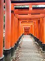Sembon-Torii in Fushimi Inari Grand Shrine 6.jpg