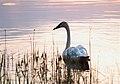 Seney National Wildlife Refuge - Wildlife (9705429106).jpg