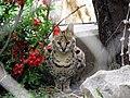 Serval-7.jpg