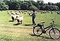 Sheeps in Nuremberg.jpg