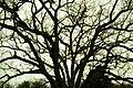 Shirley Front Street Trees Maw.jpg