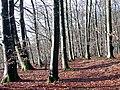 Single Trail - panoramio.jpg