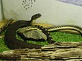 Snakes PA160297.jpg