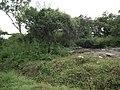 Snap from Bannerghatta National Park Bangalore 8523.JPG