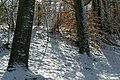 Sneeuw in Meerdaalbos - 372688 - onroerenderfgoed.jpg