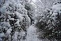 Snow, footpath north of Speldhurst Rd - geograph.org.uk - 1670595.jpg