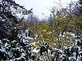 Snow in Geneva by Patrick Nouhailler - panoramio - Patrick Nouhailler's… (2).jpg
