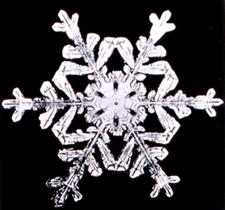 Snowflake8.png