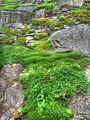 So green (8045549664).jpg