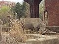 Sofia Zoo - Rhino 003.jpg