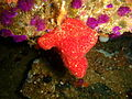 Sponge at the Rockeater P5197795.JPG