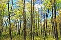 Spring Leaf-Out (3) (14085933848).jpg