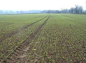 English: Spring sowing