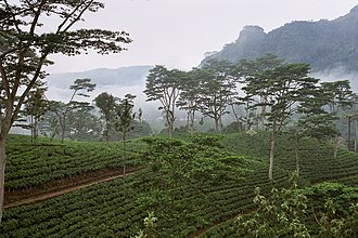 Economy of Sri Lanka - Tea estate in the central highlands