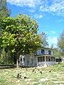 Starr-080614-9648-Terminalia catappa-habit-417 Halsey Dr Sand Island-Midway Atoll (24803914002).jpg