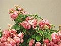 Starr-090806-4063-Mussaenda sp-pink with yellow flowers-Kahului-Maui (24344993793).jpg