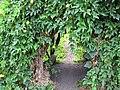 Starr-120606-7062-Luffa aegyptiaca-trellis tunnel habit-Laulima Farm Kipahulu-Maui (41747393670).jpg