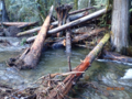 Steelhead recovery in the Sandy River Basin (27011195911).png